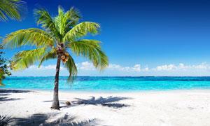 蓝天白云与长出果实的椰树高清图片