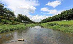 深圳中心公园美景摄影图片
