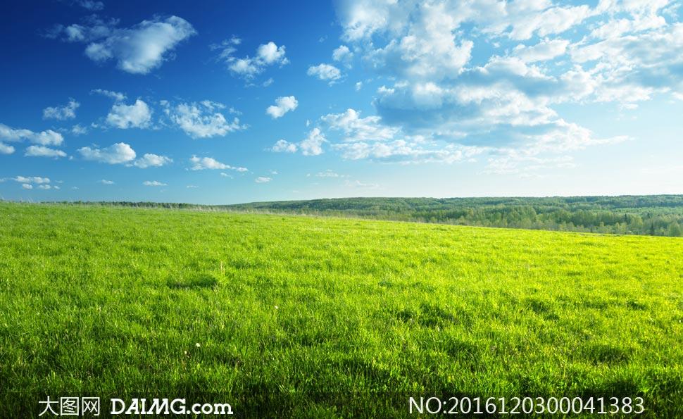 蓝天白云下的草地美景摄影图片