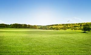 蓝天下的绿色草地美景摄影图片