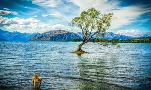 湖泊中的一棵大树摄影图片