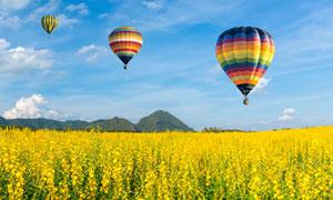 植物花海风光与热气球摄影高清图片
