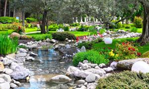 植物园里的鲜花植物等摄影高清图片