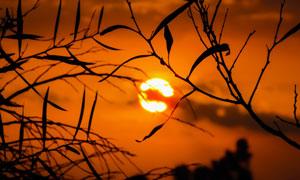 树枝掩映中的夕阳美景摄影高清图片