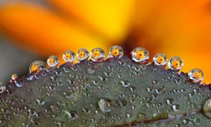 映衬出小花的晶莹水珠特写高清图片