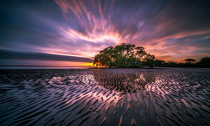 夕阳西下树木令人惊奇美景高清图片