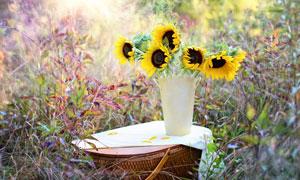 草丛与向日葵特写微距摄影高清图片