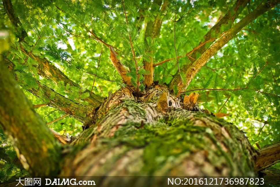 高清大图图片素材摄影近景特写微距大树