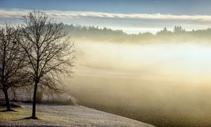 大树与远处隐约可见的树林高清图片