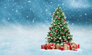 星光雪花中的圣诞树等摄影高清图片