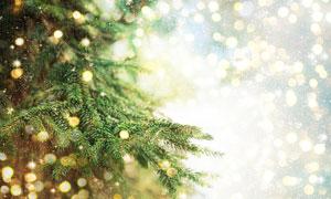 沐浴在梦幻光斑中的圣诞树高清图片