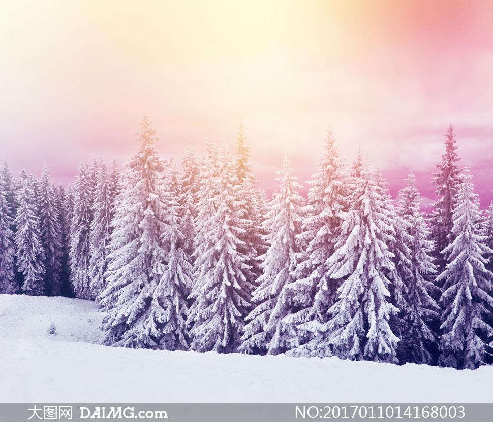 挂满着冰雪的树林风光摄影高清图片