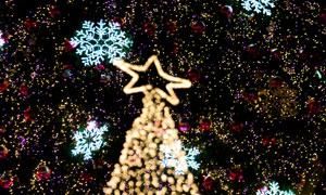 雪花与精心装点过的圣诞树高清图片