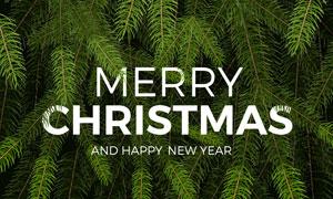 新年圣诞主题茂密树枝摄影高清图片
