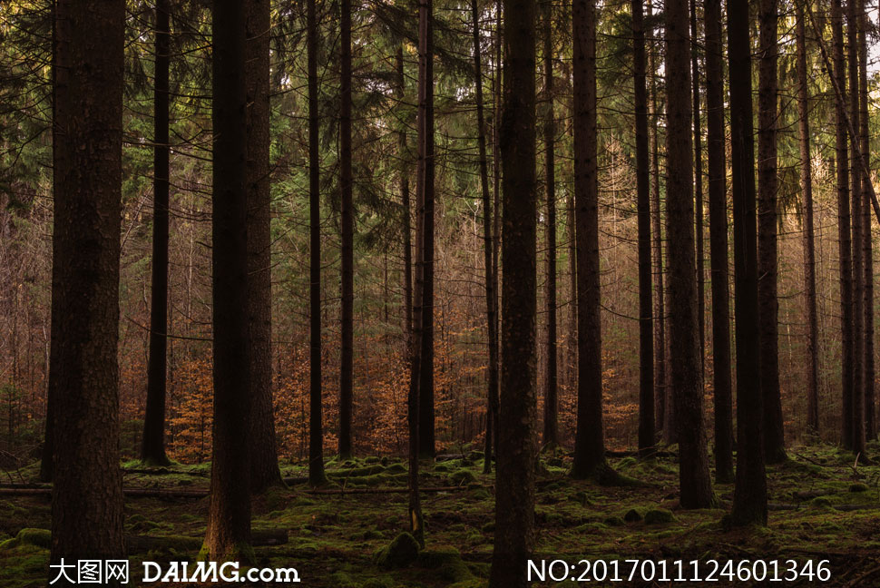 树丛与光线昏暗的树林摄影高清图片