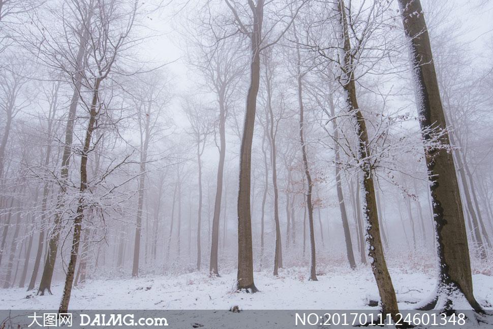 词: 高清大图图片素材摄影自然风景风光大树树木树林雪地积雪白雪冰雪