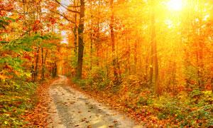 路边满是树叶的小树林摄影高清图片
