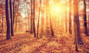 深秋树林自然风景逆光摄影高清图片