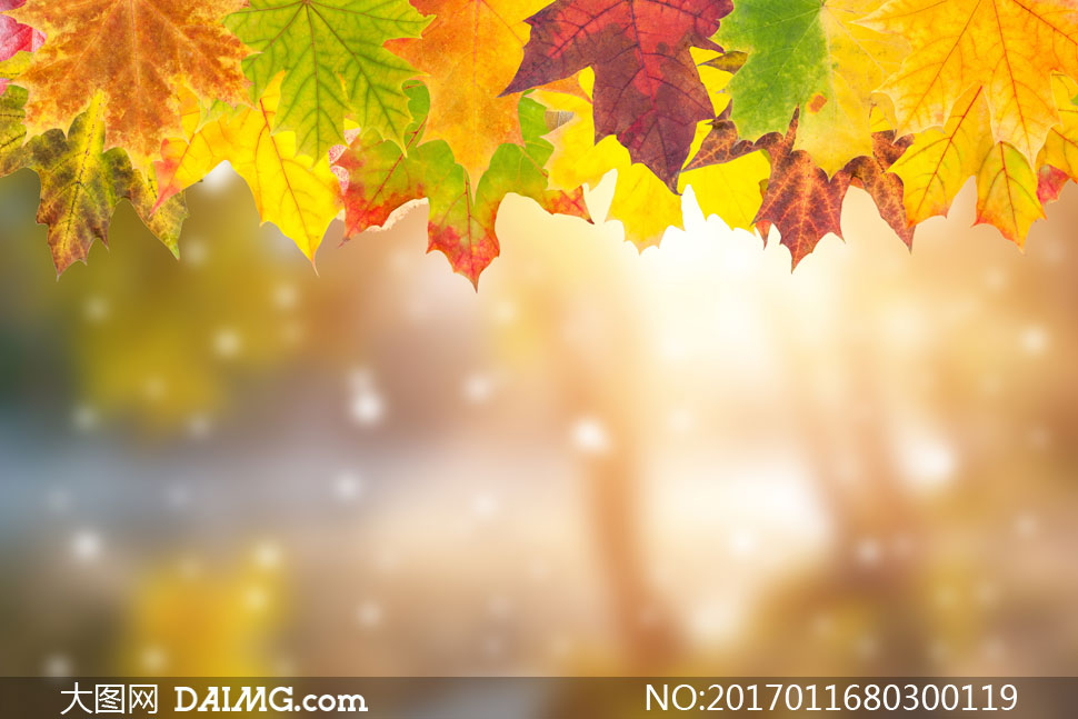 大图首页 高清图片 自然风景 > 素材信息          朦胧模糊光效与