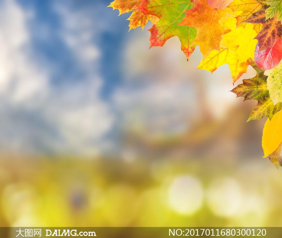 素材摄影近景特写微距树叶叶子秋天秋季黄叶红叶绿叶朦胧模糊梦幻光斑