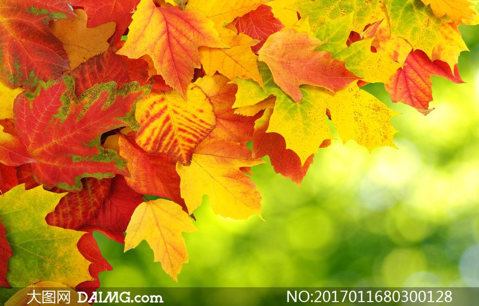 红黄树叶夹杂在一起的秋天背景图片