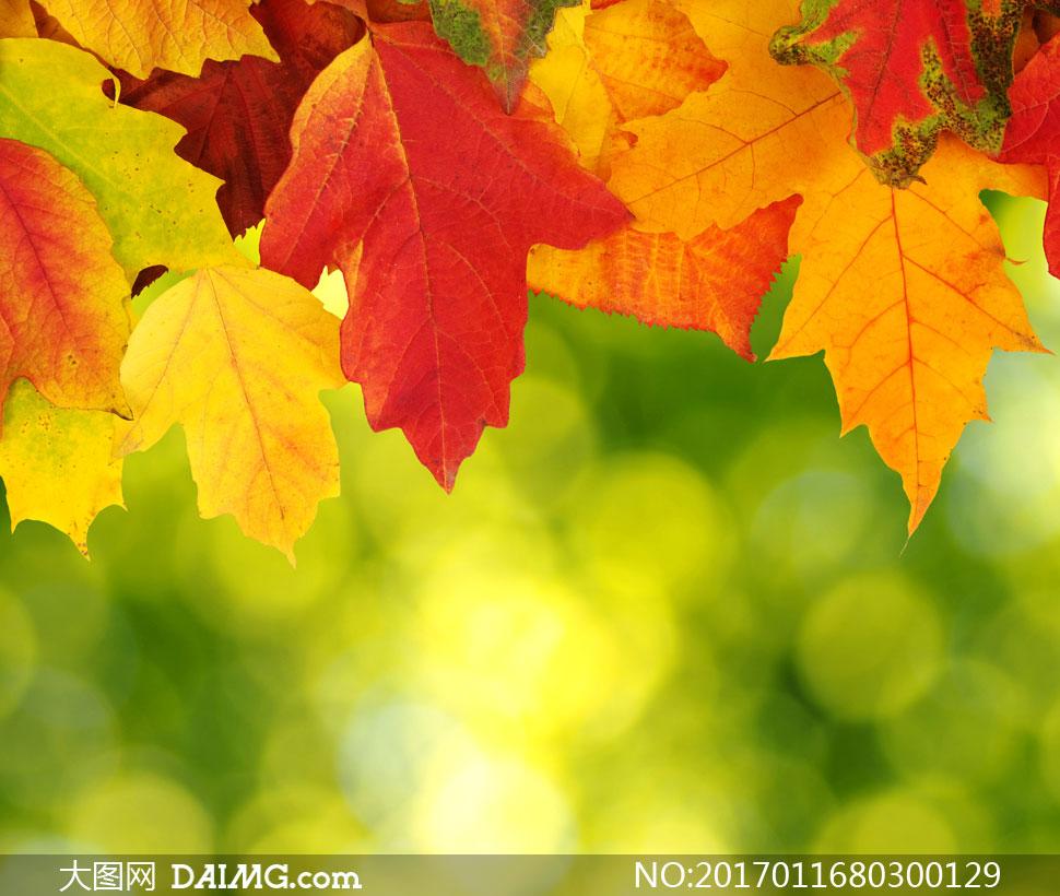 用朦胧光效点缀的秋天树叶高清图片