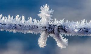 树枝上结成的冰晶特写摄影高清图片