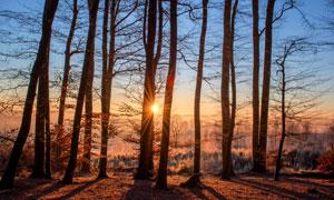 寒冷冬天凋零树木逆光摄影高清图片