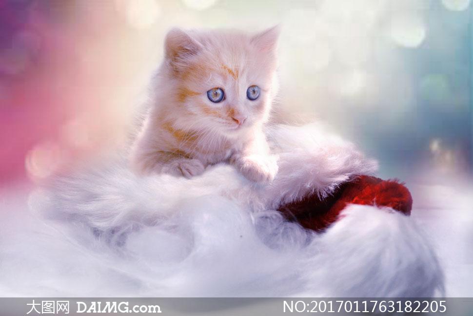 睁圆眼睛的可爱小猫咪摄影高清图片