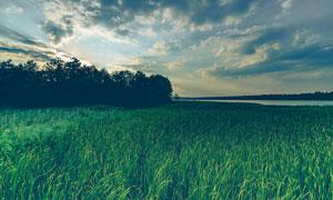 河边茂密生长的农作物摄影高清图片