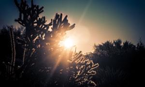 阳光照耀下的植物逆光摄影高清图片