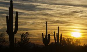黄昏天空云彩与仙人掌摄影高清图片