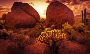 石头旁的灌木丛等植物摄影高清图片