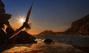 夕阳下振翅飞翔的海鸟摄影高清图片