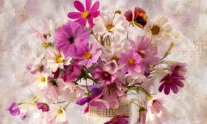 花瓶里的鲜花静物特写绘画高清图片