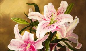 质感效果百合鲜花静物绘画高清图片
