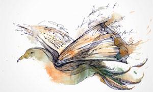 飞鸟与展开的书创意水彩画高清图片