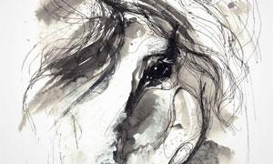 黑白素描效果马匹创意设计高清图片