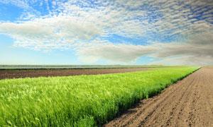 天空白云农田自然风景摄影高清图片