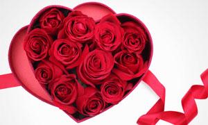 心形礼盒里的红色玫瑰摄影高清图片