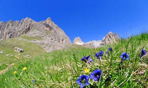 杂草丛生的半山腰风景摄影高清图片