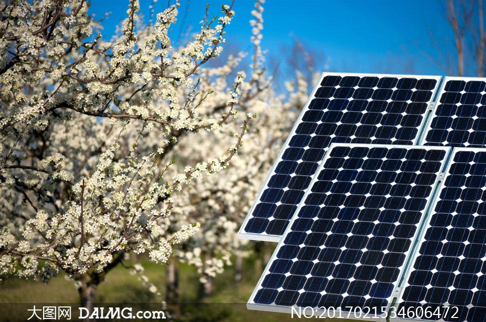 其他杂类 > 素材信息                          大树花海与太阳能板