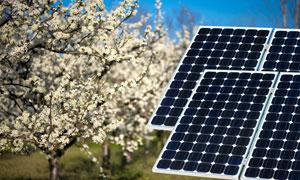 太阳能板与盛开的花枝摄影高清图片