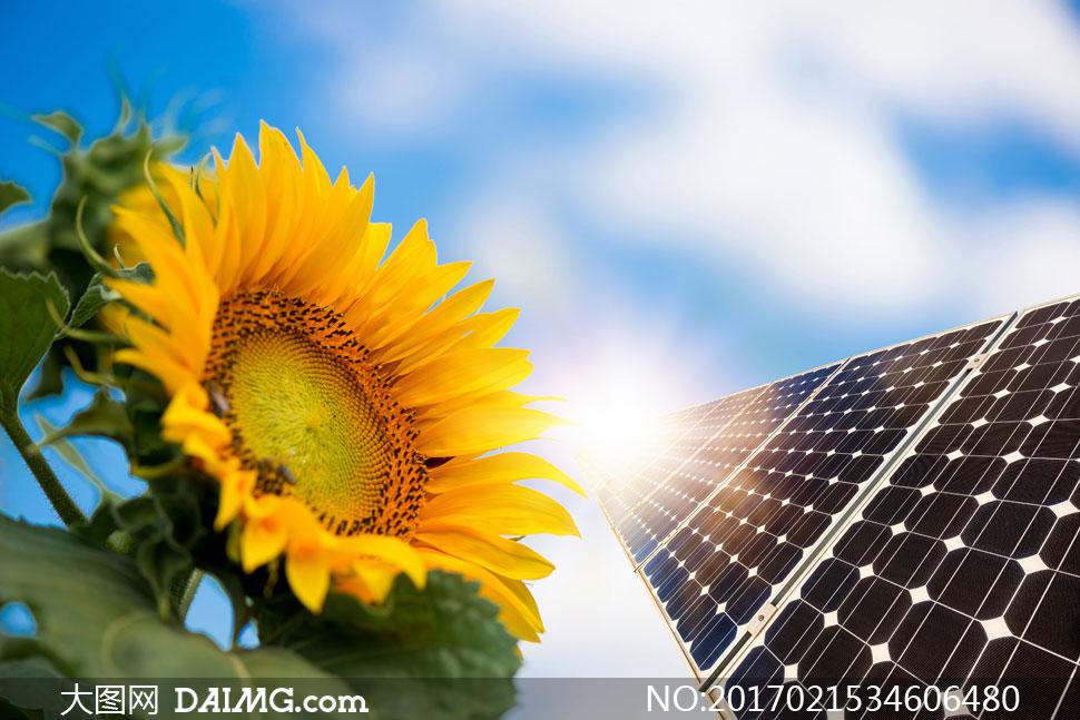 关 键 词: 高清图片素材大图摄影自然风景风光能源太阳能板近景特写
