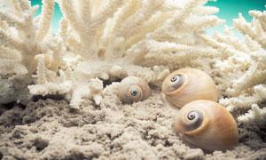 海底下的珊瑚礁等海洋生物高清图片