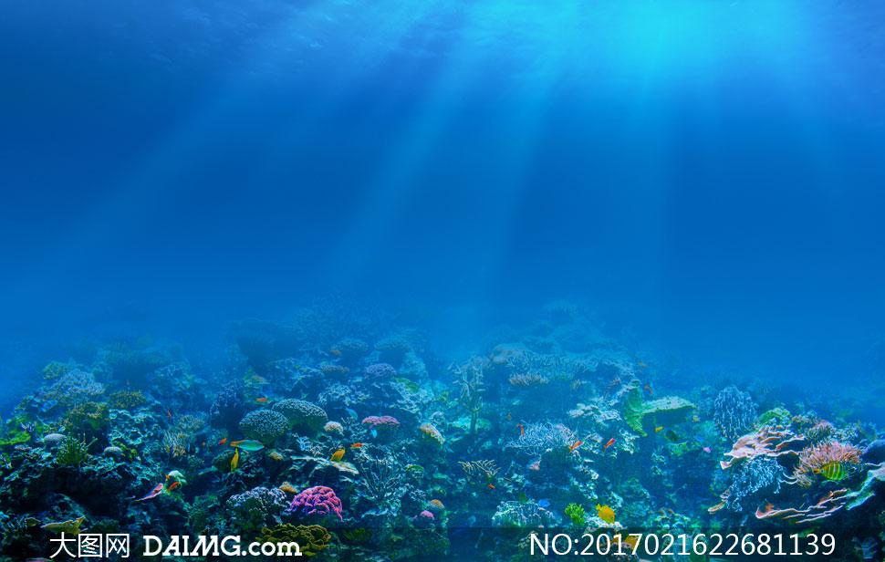 大海水下景观自然风光摄影高清图片
