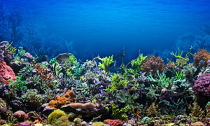 蓝色海底水下海洋生物摄影高清图片