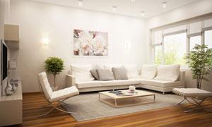 室内画与沙发茶几布置摄影高清图片