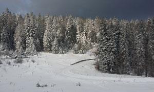 天空乌云下的雪地树林摄影高清图片