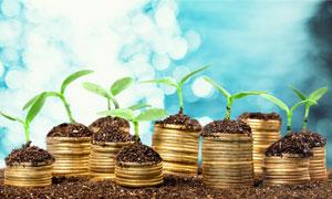 硬币上的植物幼苗创意摄影高清图片